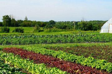 Organic Farming Solutions